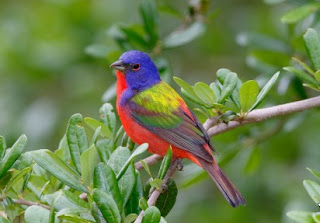 Arti Mimpi Melihat Burung
