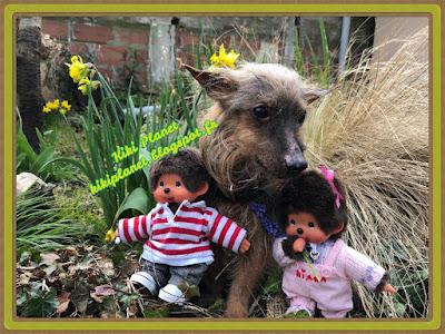 monchhichi, bebichhichi sekiguchi kiki jardin chien silky terrier yorkshire kauri