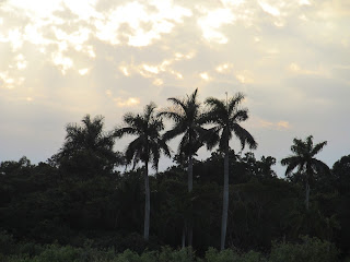 Everglades Sunset Florida, Palm trees