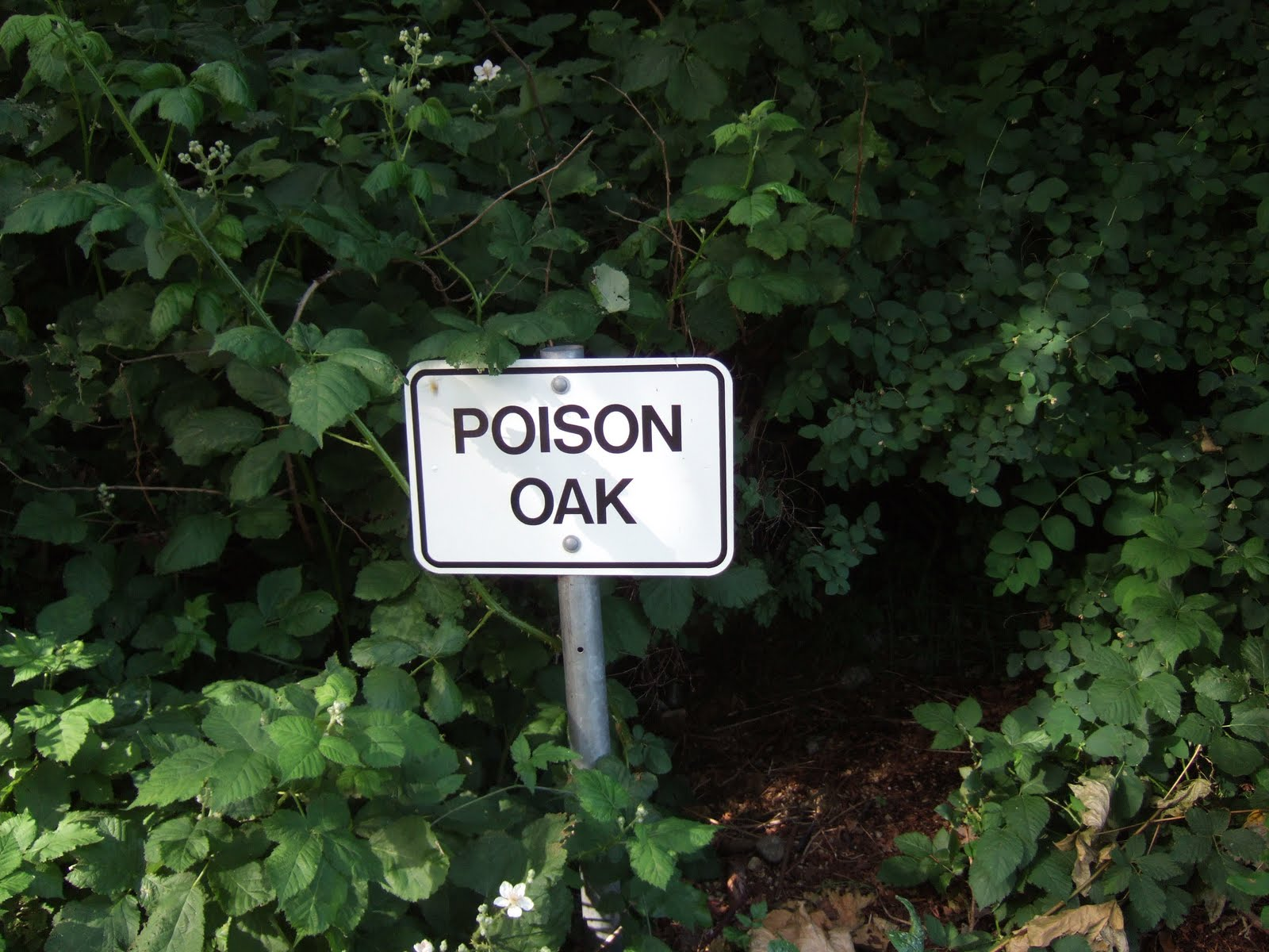 Identifying Poison Ivy Poison Oak and Poison Sumac  HGTV
