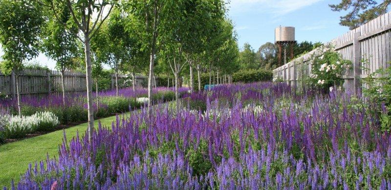 Arte y jardiner a dise o de jardines las plantas y la for Plantas jardin mediterraneo
