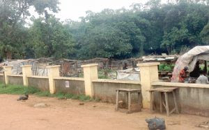 Story Of Abuja Wild Forest Where
