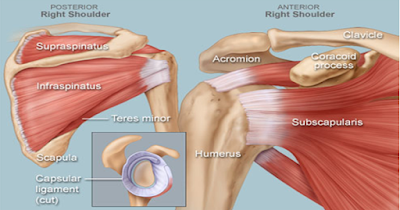 The Cause of Shoulder Injuries During Car Accidents - El Paso Chiropractor