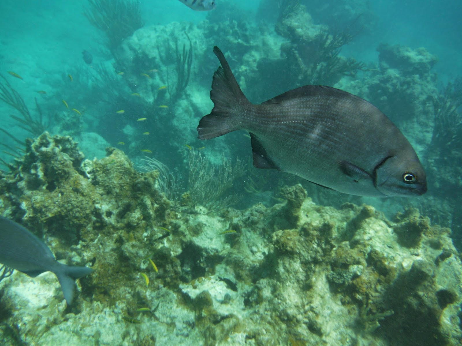 The Wandering Soldier Snorkeling Puerto Rico Trip To The Icacos