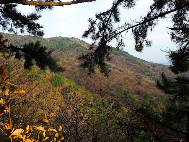 Autumn leaf colours of Geumjeongsan Mountain, Busan, South Korea