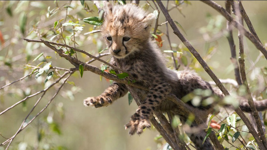 Beautiful And Dangerous Animals Birds Hd Wallpapers: African Cats Latest Photos 2013