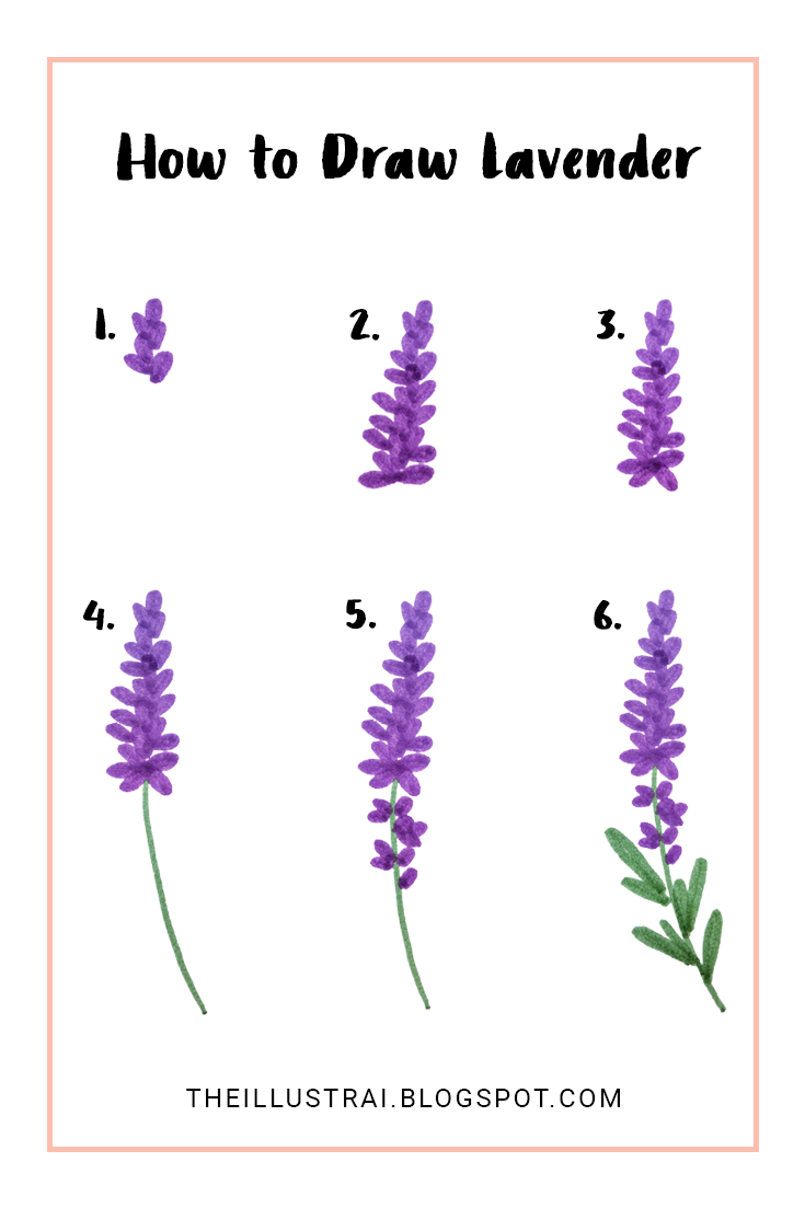 This is a very easy tutorial on how to draw lavender flowers. In six steps you will be able to create beautiful drawings of lavender that you can add to your different designs