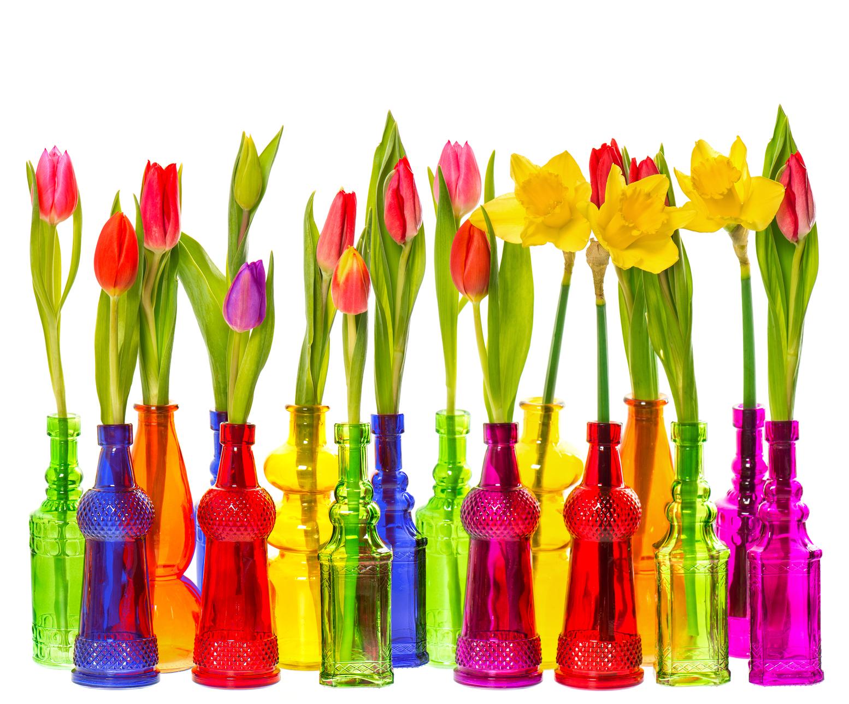 BANCO DE IMGENES Hermosas flores de colores para