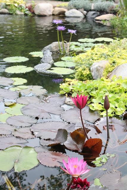 pond in summer