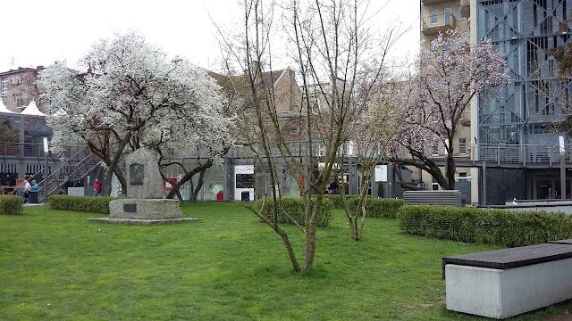 drzewa, kwiaty, wiosna,Gdynia, Świętojanska