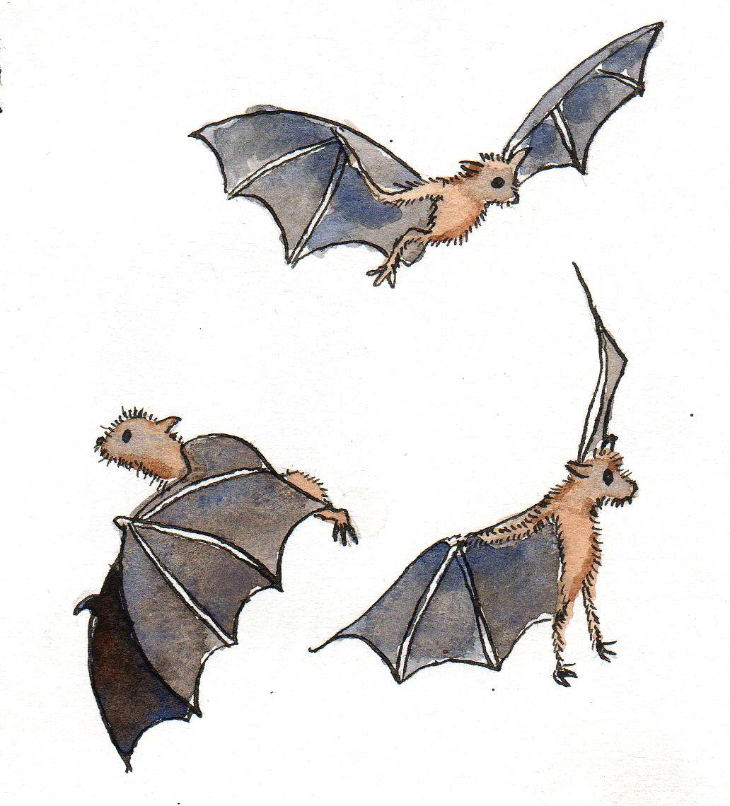 Real Bat Wings Close Up