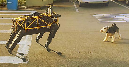 Robô cachorro gigante versus cachorrinho de verdade!