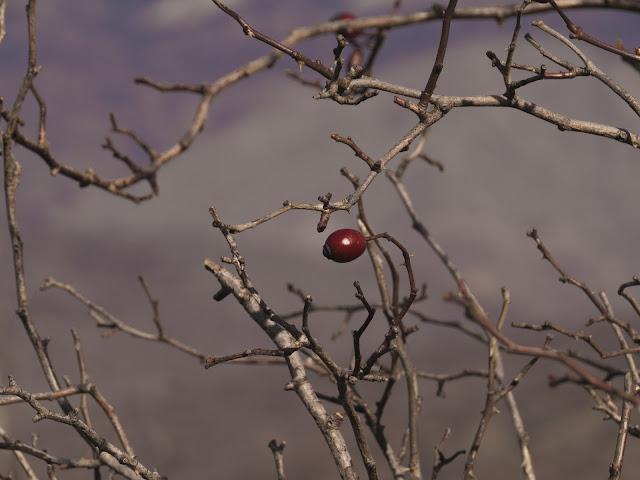 фотографии природы крыма