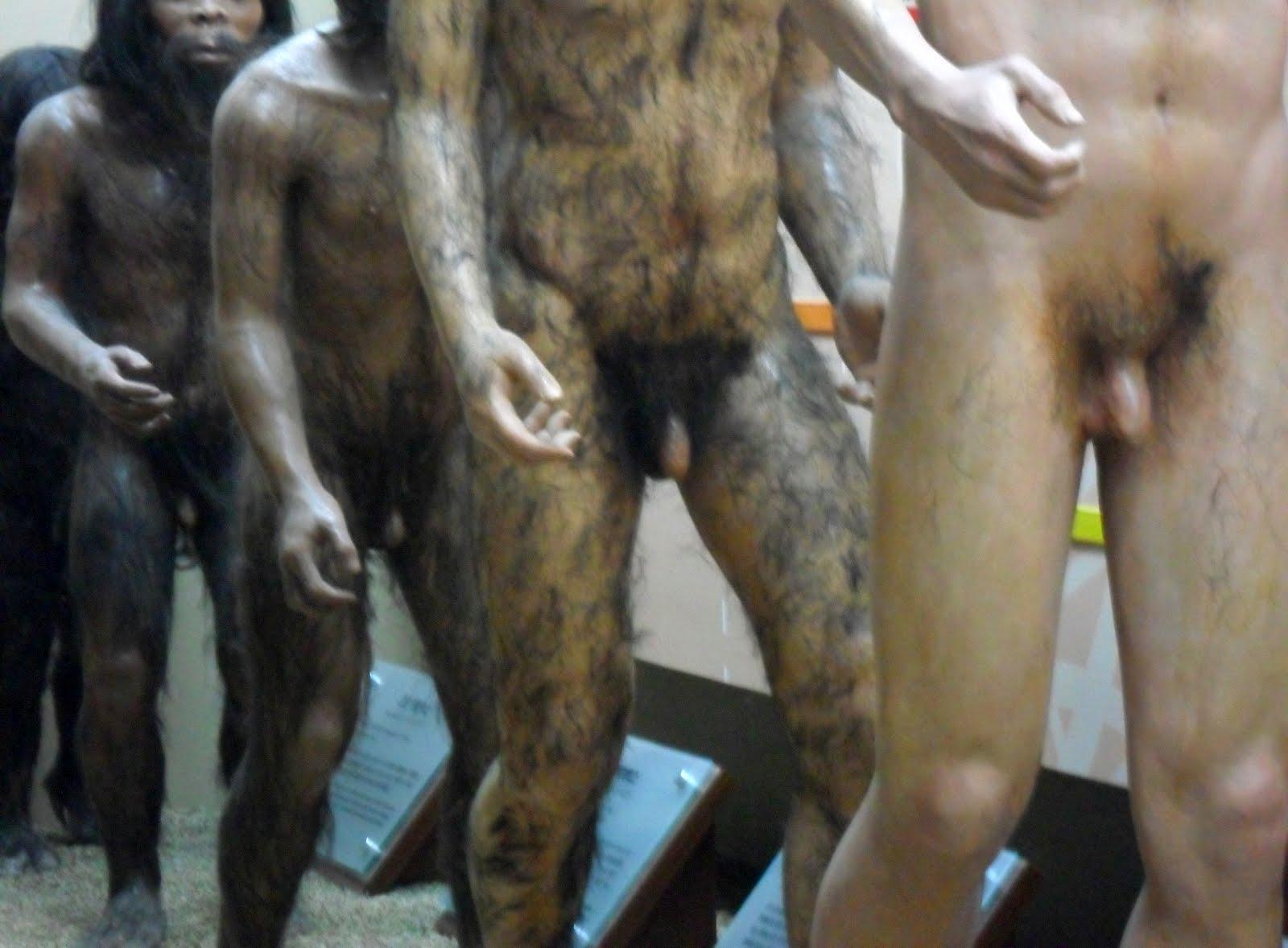 Evolution Penis 46