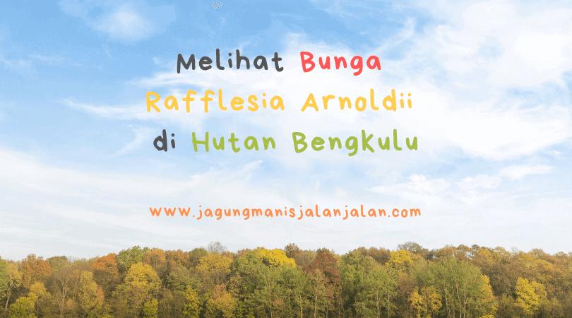 Melihat Bunga Rafflesia Arnoldii di Hutan Bengkulu