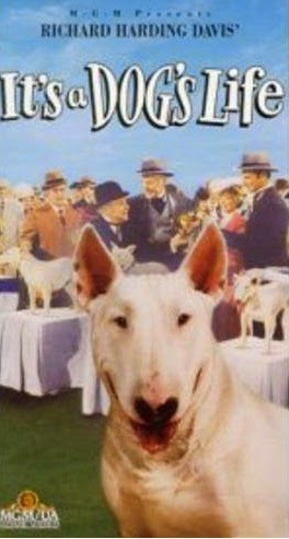 bull terrier movie 11 bull terrier en pel 237 culas 9104
