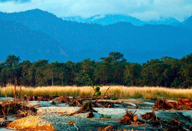 Flora and Fauna in the Manas National Park,Assam