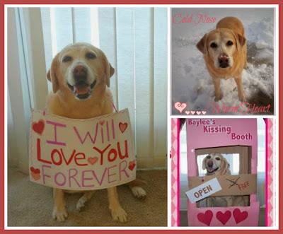 Labrador Valentine