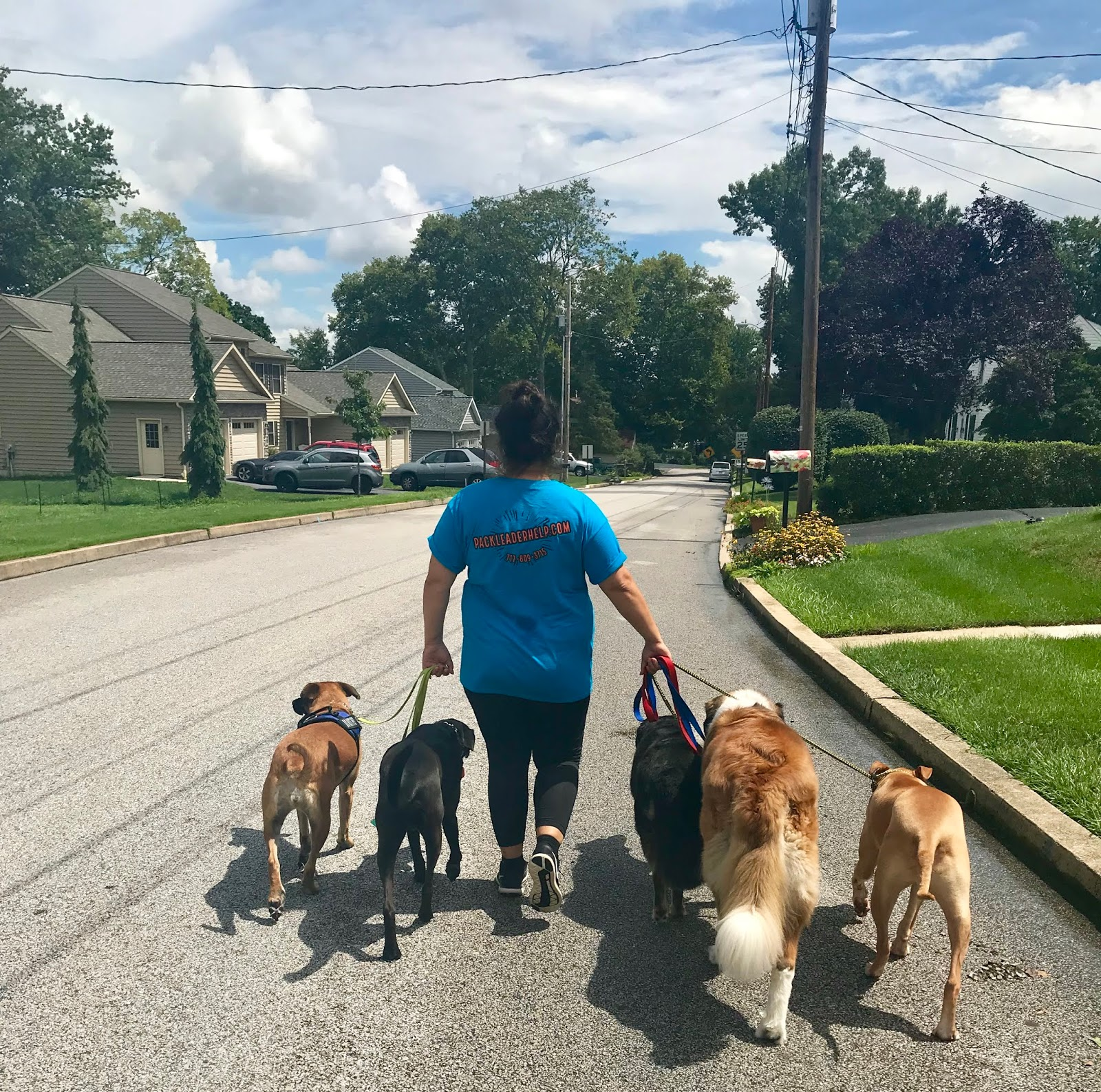 Dog Behavior & Rehabilitation With Brianna of Pack Leader Help LLC