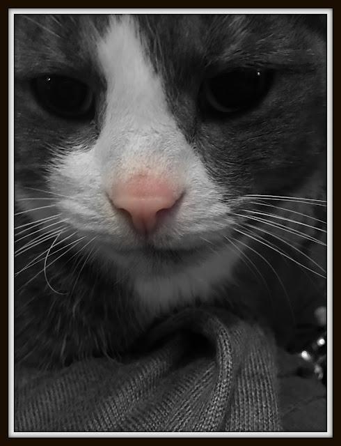 oscar the cat #mysundayphoto