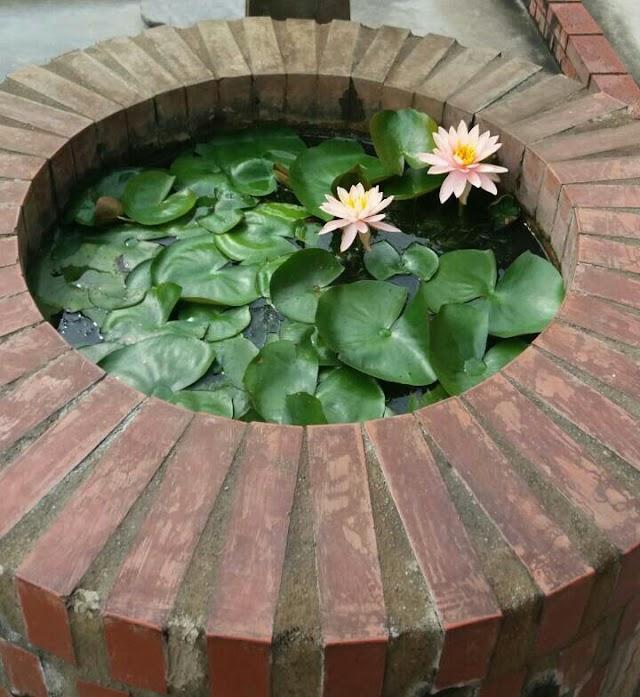 Uniknya Bunga Lili Air