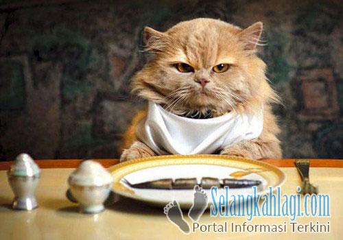 Merk Makanan Kucing Persia