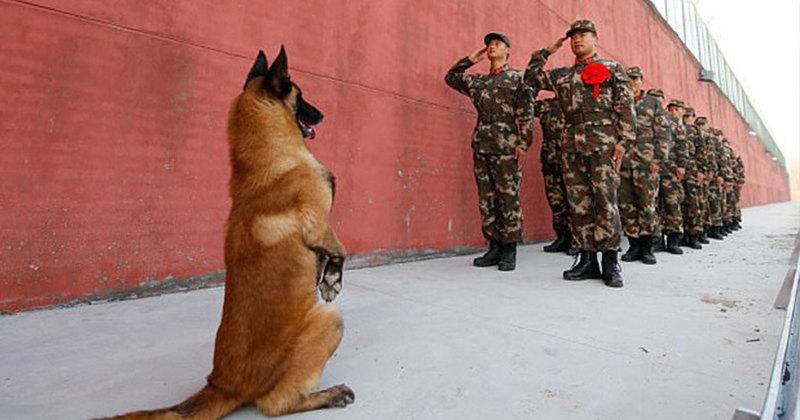 Σκύλος κάθεται στα δυο πόδια για να χαιρετήσει τον στρατιωτικό φροντιστή του