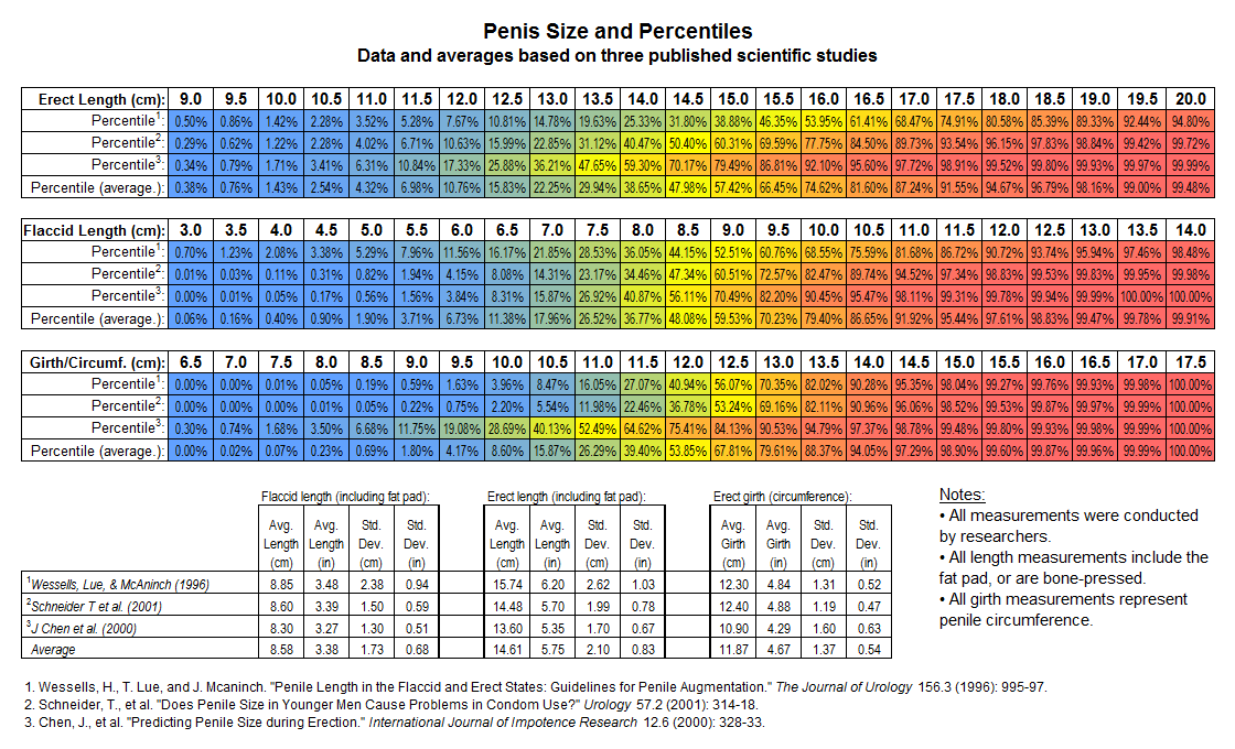 Average size of erection