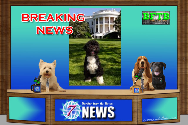 BFTB NETWoof News set with screen of Bo the White House Dog