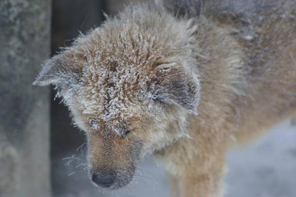 Chú chó nhỏ co ro giữa mưa tuyết Mẫu Sơn khiến người xem rớt nước mắt