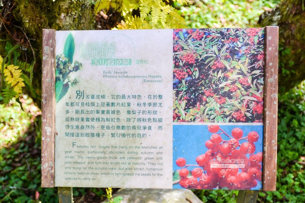 新竹五峰鄉景點,雪霸國家公園,雪霸休閒農場,雲霧步道,山椒魚生態中心,張學良故居
