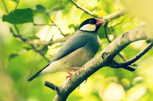 Download 87 Foto Gambar Burung Yang Indah