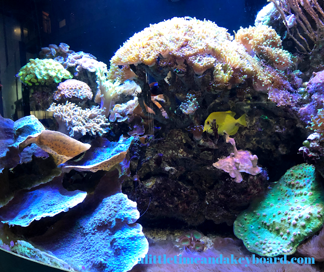 Learning about coral reefs at Great Lakes Aquarium in Duluth, Minnesota