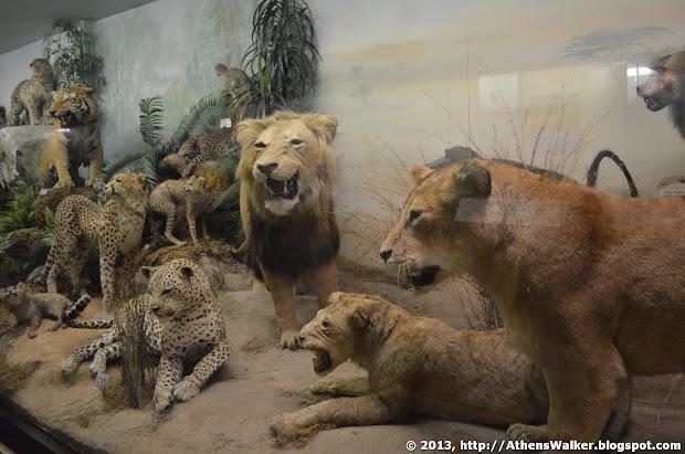 Athens Walker Goulandris Natural History Museum And Gaia