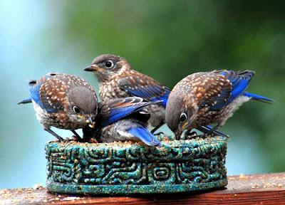 اجمل طيور العالم بالصور