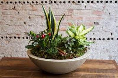 Conheça algumas plantas que podem evitar o mau-olhado e trazer prosperidade