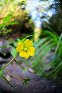 yellow flower on river bank