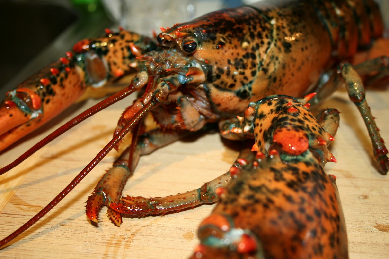 the biggest animals kingdom and in the world lobster lobsters are ...