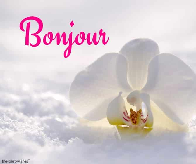 good morning in french with a white flower picture