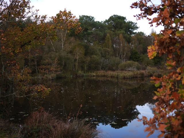 étang Aumée , marais et belles couleurs d'automne. Fégréac 44