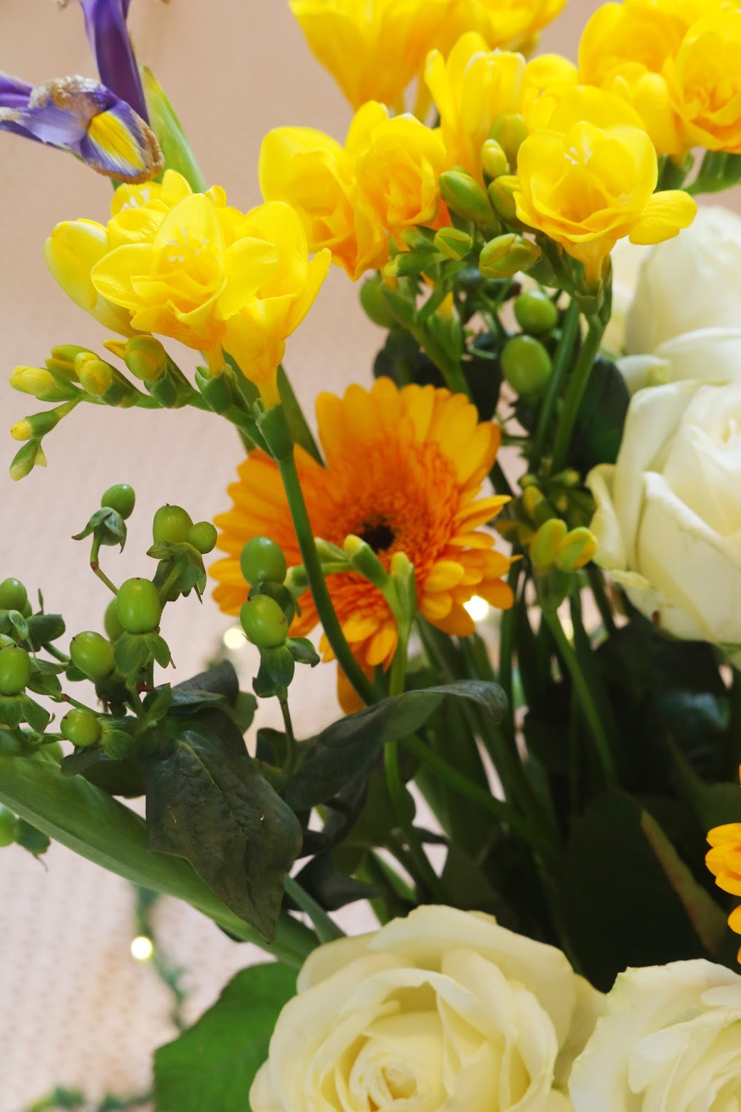 The most beautiful home flowers. Freesia