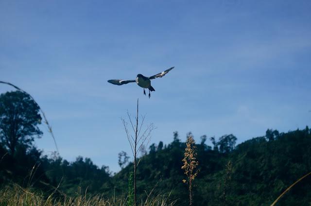 Satwa Burung Taman Nasional Tengger Bromo Semeru