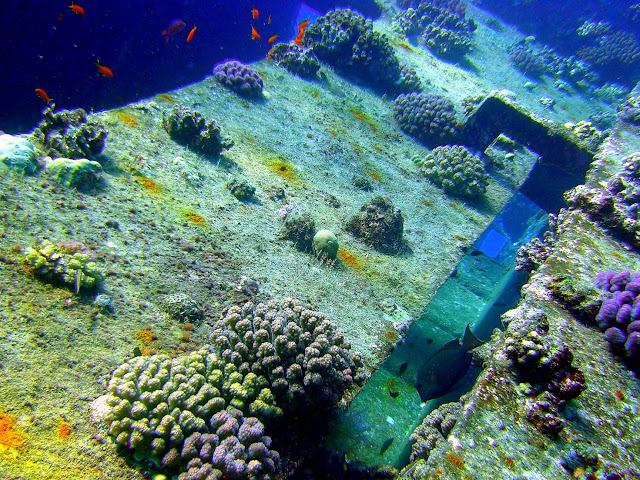 rosalie moeller wreck, WW II, egypt, northern red sea