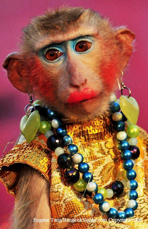 Foto Monyet Lucu  Aing Bisa