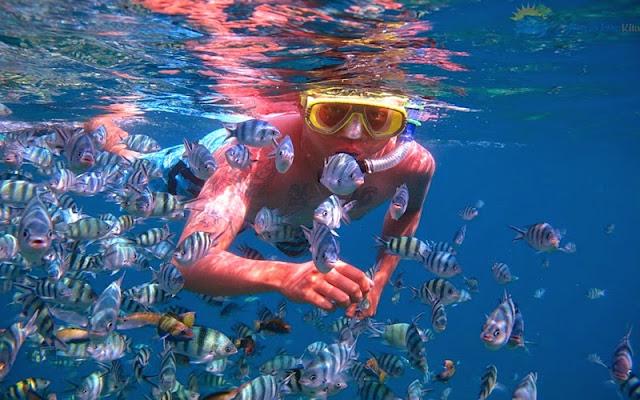Klik untuk Melihat Snorkeling Karimunjawa