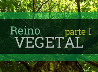 reino vegetal resumo características exemplos