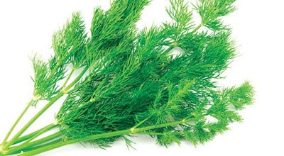 Since ancient times, the dill had benefits as a natural cure for certain disease states. There are known effective facts of dill as carminative, at hiccups, vomiting, and other digestive problems.