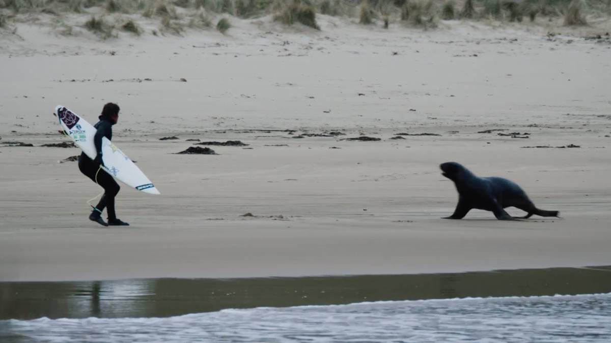 leon marino surf