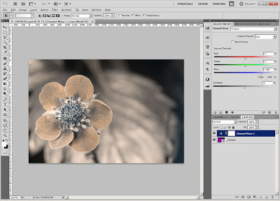 Processing false colour ultraviolet flower photo in Adobe Photoshop