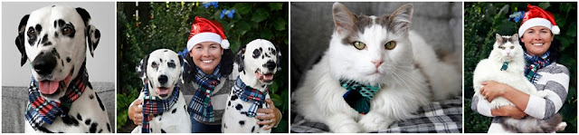Christmas photo of Dalmatian dogs, a cat, and their owner all wearing matching scarves